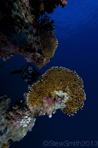 one of the beautiful reefs of Sharm el Sheikh by Stew Smith 
